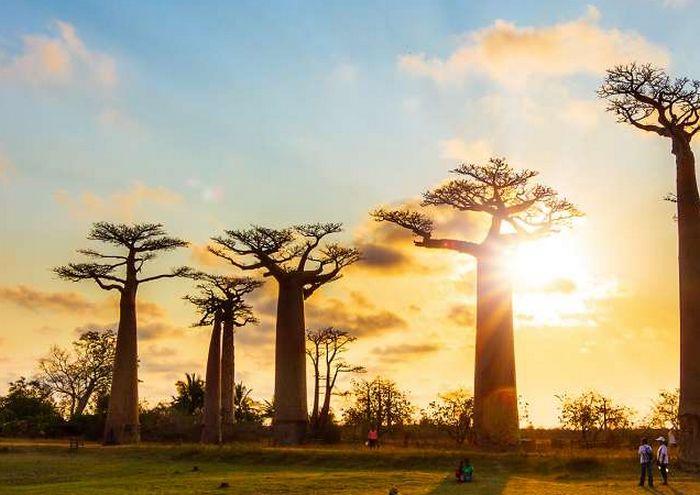 Voyage : Les endroits à ne pas rater à Madagascar